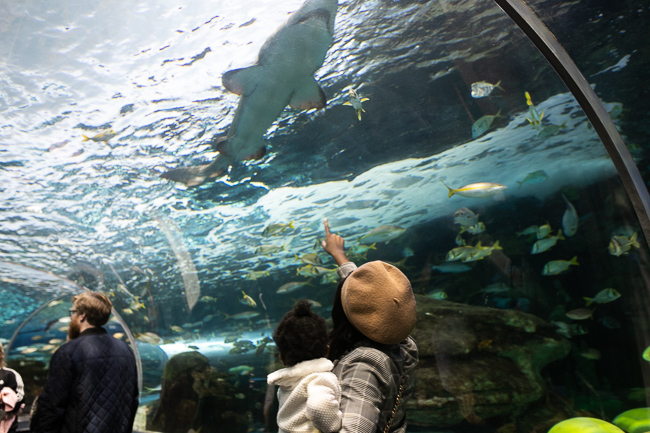 Photo of family observing Ripley's aquarium Canada water tunnel